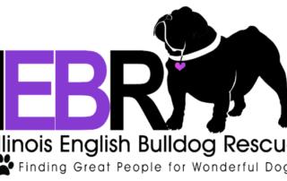 calendar fundraising helped Illionois english bulldog rescue